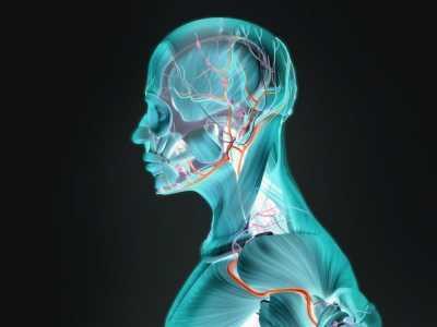 人体有什么功能 它们分别起什么作用